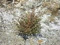 Kevés növény él meg a sós talajon, ezért a környék egy része rezervátum